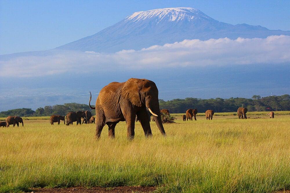 elefantes-parque-amboseli